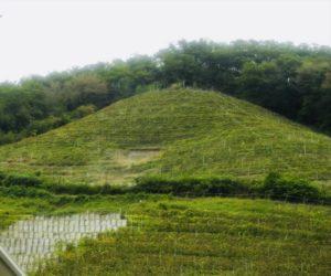 ココ・ファーム・ワイナリー ぶどう畑
